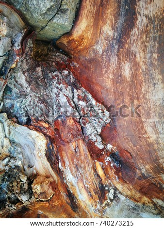 texture tree background wood colored #740273215