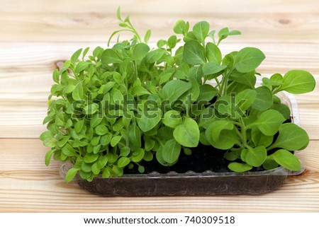 Potted seedlings growing in biodegradable peat moss pots on wooden background with copy space #740309518