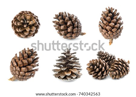 Mix Pine cone isolated on white background Royalty-Free Stock Photo #740342563