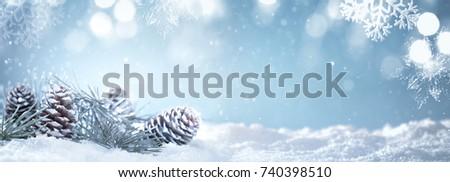 Christmas fir branch on snow