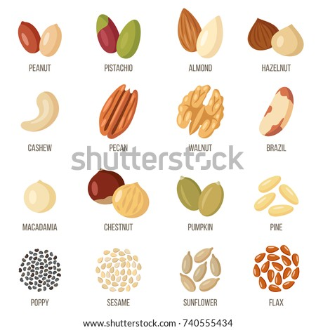 Vector set of named nuts and seeds. Flat style. Royalty-Free Stock Photo #740555434