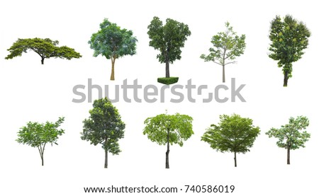 Tree isolated on white background. The tree is took from around national park area and then die cutting.Can be use to garden design or interior design or any content involve tree.  #740586019