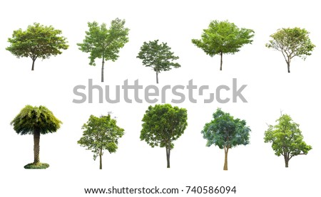 Tree isolated on white background. The tree is took from around national park area and then die cutting.Can be use to garden design or interior design or any content involve tree.  #740586094