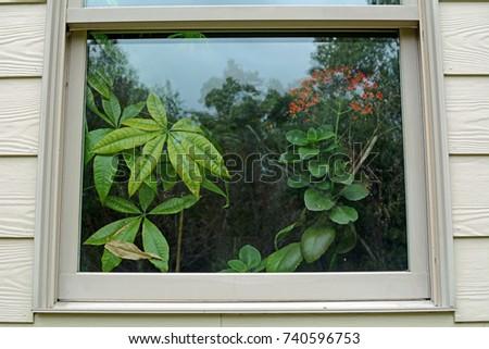 Window Reflections #740596753