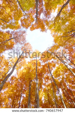 Yellow canopy from above #740657947