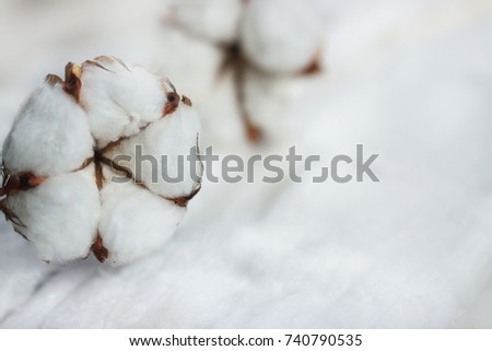 Delicate white flowers of cotton on a wooden Board. Beautiful natural background. #740790535