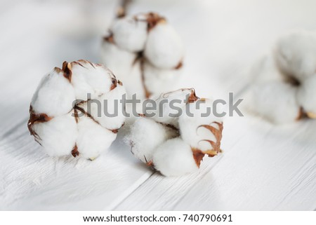 Delicate white flowers of cotton on a wooden Board. Beautiful natural background. #740790691