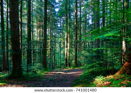 Forest in the Carpathians. #741001480