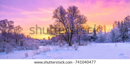 winter panorama landscape with forest, trees covered snow and sunrise. winterly morning of a new day. purple winter landscape with sunset, panoramic view Royalty-Free Stock Photo #741040477