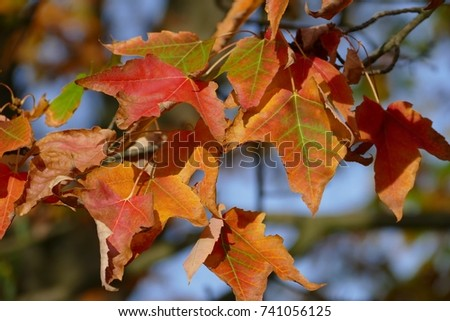 Autumn leaves #741056125