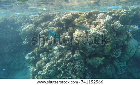The beautiful coral reefs in Red Sea #741152566