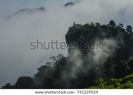 Mountain and nature of the mountain. Located in the area of Doi Inthanon, Chiang Mai. #741229024