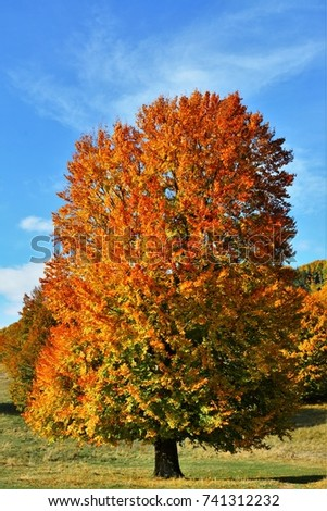 autumn landscape with wilted trees #741312232
