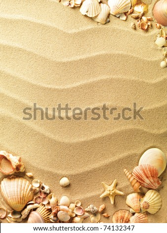 sea shells with sand as background #74132347