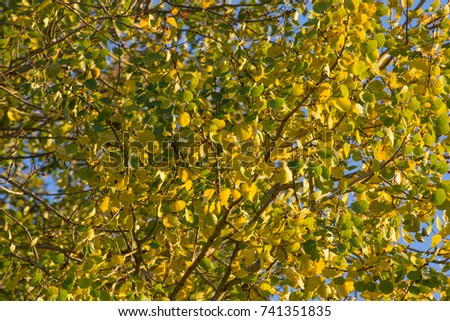 foilage background in autumn, yellow and green #741351835