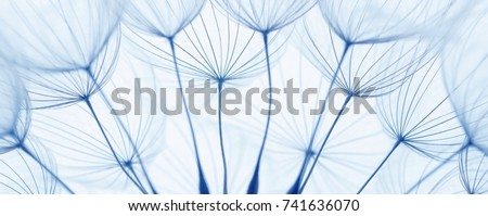 close up of dandelion seeds