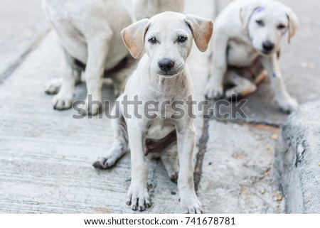 Stray dogs sit on the floor with sad eyes and look at the camera, Selective focus. #741678781