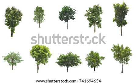 Tree isolated on white background. The tree is took from around national park area and then die cutting.Can be use to garden design or interior design or any content involve tree. #741694654
