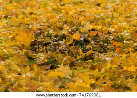 Autumn leaves background #741769081