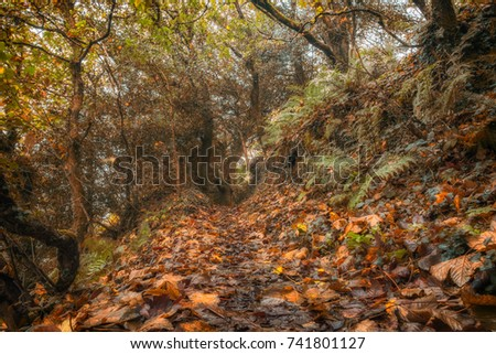 Woodland path walk in autumn. #741801127