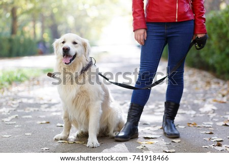 Beautiful cutie dog walking with owner outdoors. Pet concept. #741918466