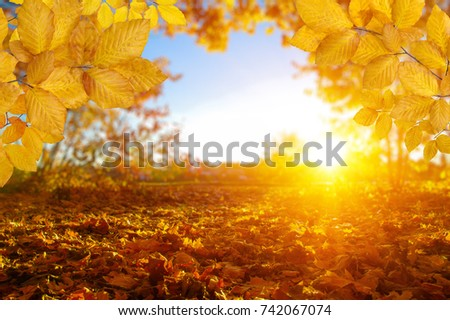 Autumn leaves on the sun and blurred trees . Fall background. #742067074