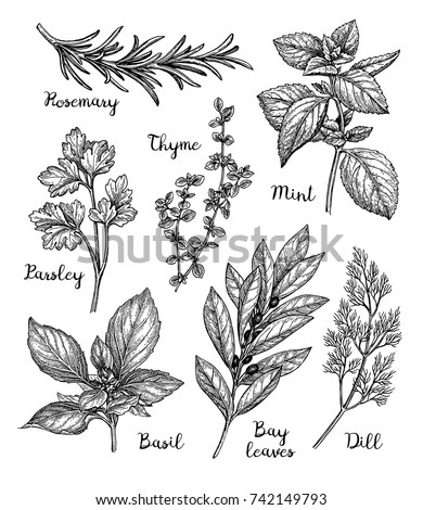 Herbs set. Ink sketch isolated on white background. Hand drawn vector illustration. Retro style. #742149793