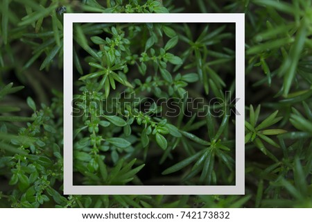 Natural leaf and tree, paper card or frame for text background, copy space #742173832