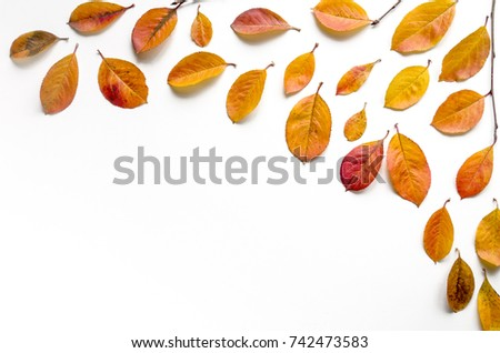 Autumn composition. Fallen yellow leaves on a white background. Flat lay, top view, copy space #742473583