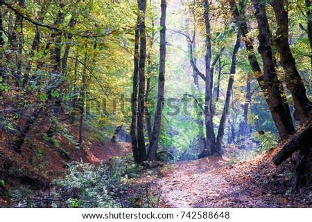 Beautiful autumn forest landscape. Dilijan National Park .Armeia. #742588648