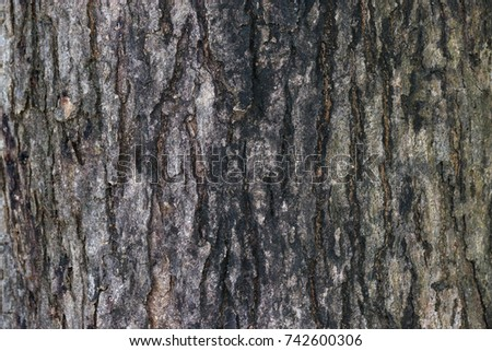Surface of a big tree black bark. Traces of nature. Use for background or banner website and template. #742600306