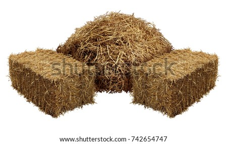 Piles of hay isolated on a white background as an agriculture farm and farming symbol of harvest time with dried grass straw as a mountain of dried grass haystack. #742654747