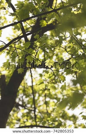 young green leaves in nature on a sunny day #742805353