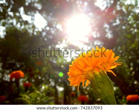 morning sunshine and flowers  #742837093