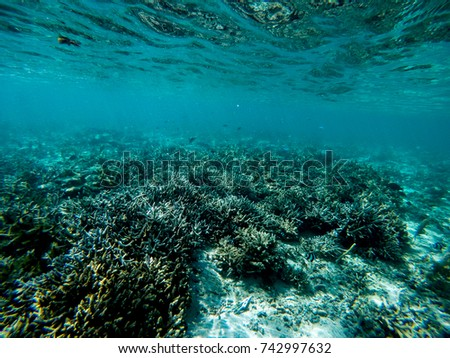 Wild corals in natural habitat indian ocean Mauritius #742997632