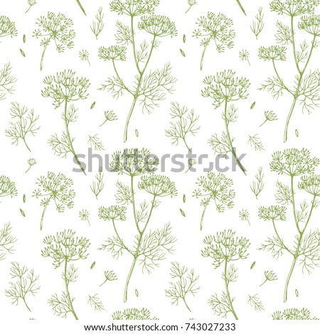 vector pattern of dill, sulfur root sketch, fennel  linear illustrations  Royalty-Free Stock Photo #743027233