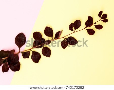 Minimalist fashion and beauty nature photo, view to the top, floral artistic photo, summer background, minimalism. Trendy minimal style with paper backdrop #743173282