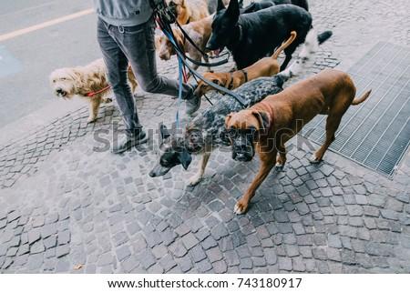 Dog walker #743180917