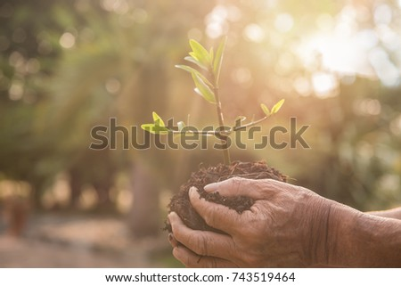 Senior man holding young plant in hands against spring green background in the morning. Ecology concept. Selective focus. Free from copy space with sunlight effect picture.