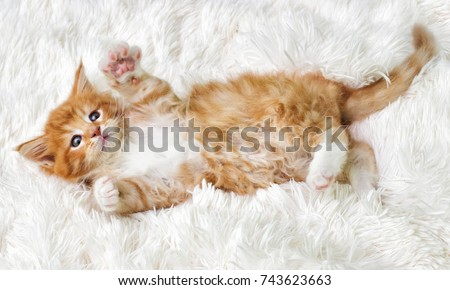 little cute kitten maine coon looks up Royalty-Free Stock Photo #743623663