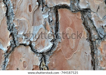 decorative design old dry tree bark. abstract antique rough picture nature. horizontal lines interior construction.macro line texture pattern. grainy texture dark brown trunk skin. structure surface  #744187525