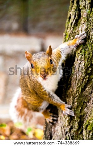 Lovely squirrel being adorable in Central Park #744388669