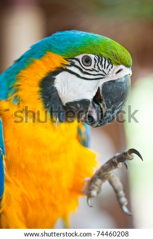 Close Up of Blue and Yellow Macaw #74460208