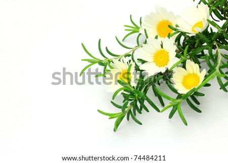 rosemary and white flower #74484211