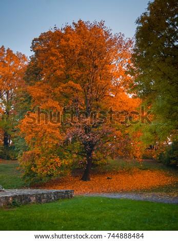 Autumn #744888484