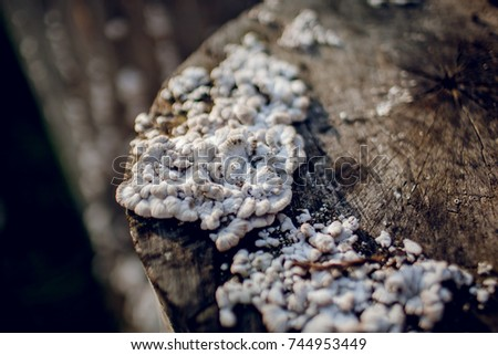 mushrooms on a stump #744953449