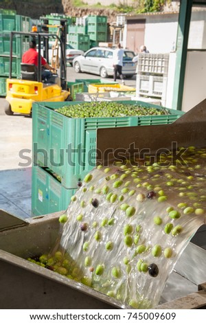 The process of olive washing and defoliation in the chain production of a modern oil mill #745009609