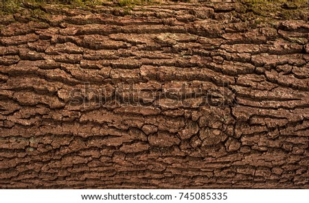 Relief texture of the brown bark of a tree with green moss on it. Horizontal photo of a tree bark texture. Relief creative texture of an old oak bark. #745085335