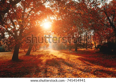 Scenic image of bright trees in sunny beams. Location Carpathians, Ukraine, Europe. Warm tone. Holiday concept. Perfect wallpapers. Discover the beauty of earth. Great picture of wild area.