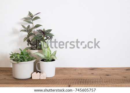 Houseplant  on table with copy space. Home decor #745605757